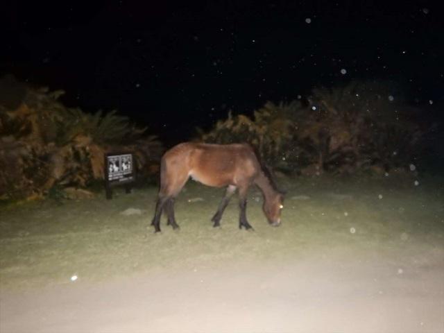 都井岬の馬2